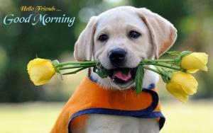 Hình ảnh chào ngày mới dễ thương, cho ngày mới thật vui vẻ