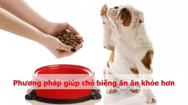 cách điều trị chó biếng ăn bỏ bữa